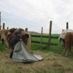 aprile attraversando l'Aude se non piove è il vento non dà tregua l'importante è avere sempre un posto sicuro dove fermarsi e fare in modo che i cavalli nn si raffreddino troppo velocemente in quel momento