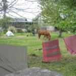 forse questa storia potrebbe finire qui, con i cavalli sereni che si godono l'erba di primavera a Bartres, sopra Lourdes, ... o forse non può finire perchè ogni giorno che Anna o io montiamo in sella è come se facessimo ancora un pezzettino di strada.. oltre Lourdes, verso qualcosa che non è qui verso un Luogo che solo a kavallo si può raggiungere