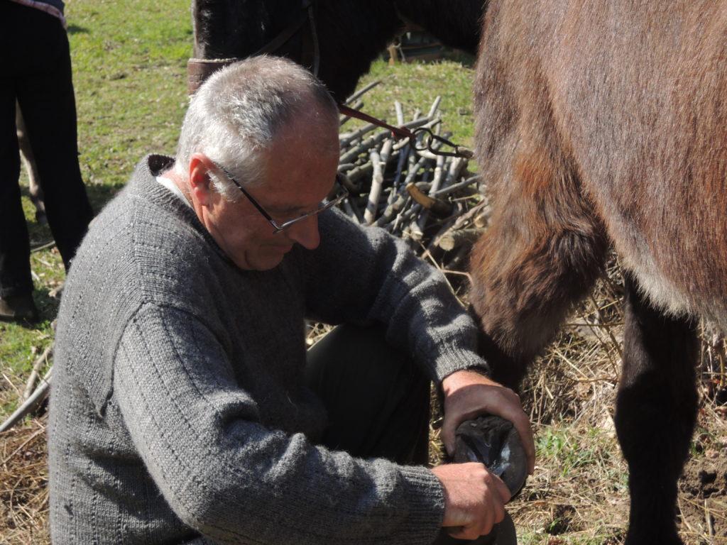 Elio Giuliano
